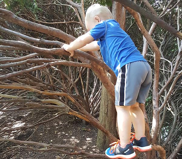 climb-tree